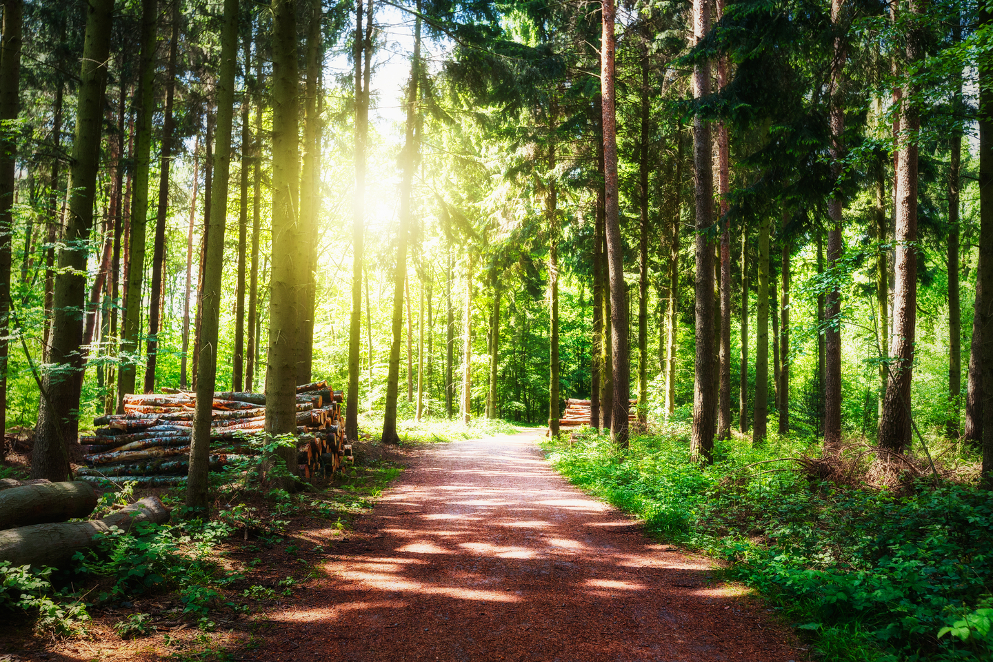 Path through a green forest with sunlight